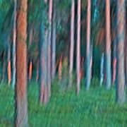 Finland Forest Print by Heiko Koehrer-Wagner