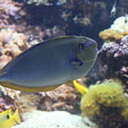 Fish - National Aquarium In Baltimore Md - 1212121 Print by DC Photographer