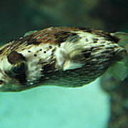 Fish - National Aquarium In Baltimore Md - 1212136 Print by DC Photographer