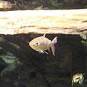 Fish - National Aquarium In Baltimore Md - 121249 Print by DC Photographer
