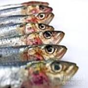 Fishes Print by Bernard Jaubert