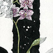 Flower Orchid 04 Elena Yakubovich Print by Elena Yakubovich