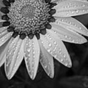 Flower Water Droplets Print by Ron White