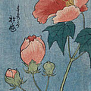 Flowering Poppies Tanzaku Print by Ando Hiroshige
