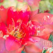 Flowers Bloom In Multiples Print by Sonja Quintero
