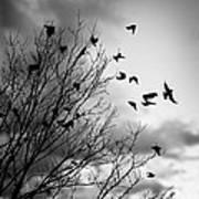 Flying Birds Print by Elena Elisseeva