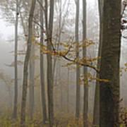 Forest In Autumn Print by Matthias Hauser