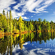 Forest Reflecting In Lake Print by Elena Elisseeva