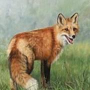 Fox  Print by David Stribbling