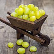 Fresh Green Grapes In A Wheelbarrow Print by Aged Pixel