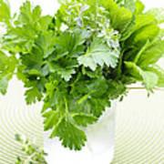 Fresh Herbs In A Glass Print by Elena Elisseeva