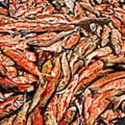 Freshly Catched Salmons At The Nenana River - Ak Print by Juergen Weiss