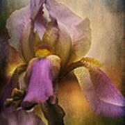 Frilled Beauty Print by Sari Sauls