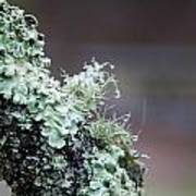 Frosted Moss Print by Mary Katherine Powers