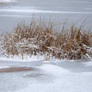 Frozen Reeds Print by Julie Palencia