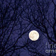 Full Moon Bare Branches Print by Thomas R Fletcher