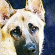 German Shepherd - Soul Print by Sharon Cummings