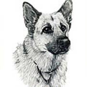 German Shepherd Print by Terri Mills