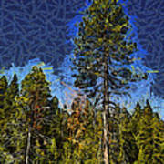 Giant Abstract Tree Print by Barbara Snyder