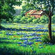 Glen Rose Bluebonnets Print by Vickie Fears