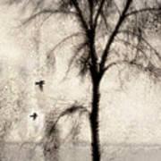 Glimpse Of A Coastal Pine Print by Carol Leigh