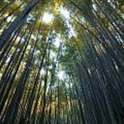 Golden Bamboo Forest Print by Aaron S Bedell