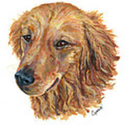 Golden Retriever Print by Barb Capeletti