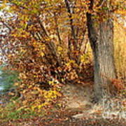 Golden Riverbank Print by Carol Groenen
