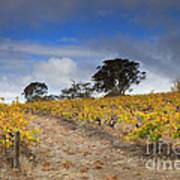Golden Vines Print by Mike  Dawson