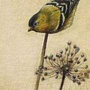 Goldfinch Print by Lori  McNee