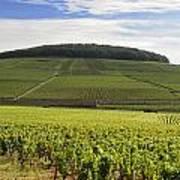Grand Cru And Premier Cru Vineyards Of Aloxe Corton. Cote De Beaune. Burgundy. France. Europe. Print by Bernard Jaubert