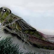 Grasshopper Resting Print by Cynthia Adams