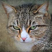 Gray Tabby Cat Print by Jai Johnson