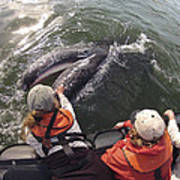 Gray Whale Calf And Tourists Baja Print by Flip Nicklin