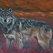 Gray Wolf Print by Tom Blodgett Jr