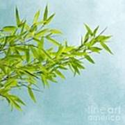Green Bamboo Print by Priska Wettstein