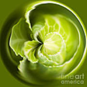 Green Cabbage Orb Print by Anne Gilbert