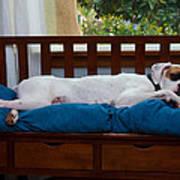 Guard Dog Print by Dennis Reagan