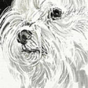 Harley The Maltese Print by Linda Minkowski
