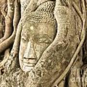 Head Of Buddha Ayutthaya Thailand Print by Colin and Linda McKie