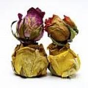 Heap Of Wilted Roses Print by Bernard Jaubert