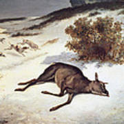 Hind Forced Down In The Snow Print by Gustave Courbet