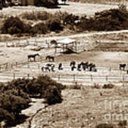 Horse Farm At Kourion Print by John Rizzuto