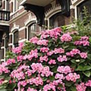 Hydrangeas In Holland Print by Carol Groenen