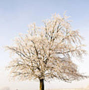 Iced Tree Print by Anne Gilbert