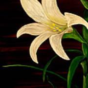 In Bloom Print by Mark Moore
