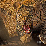In No Uncertain Terms Print by Ashley Vincent