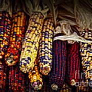 Indian Corn Print by Elena Elisseeva