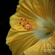 Invitation To Beauty Hibiscus Flower  Print by Inspired Nature Photography Fine Art Photography