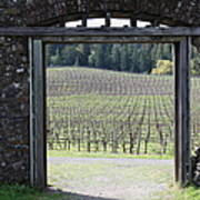 Jack London Ranch Winery Ruins 5d22132 Print by Wingsdomain Art and Photography